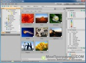 ACDSee Photo Manager скриншот 4
