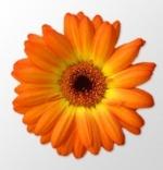 Графический редактор Artweaver 3.0.4 Free