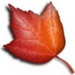 Органайзер с широкими возможностями Maple