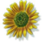 Программа для преобразования различных картинок в схемы для вышивания Stitch Art Easy